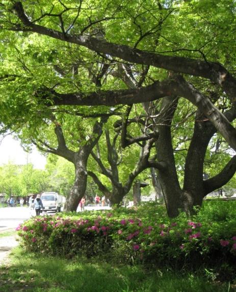park near osaka castle