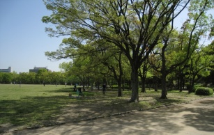 trees near osaka castle