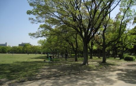 trees near osaka castle